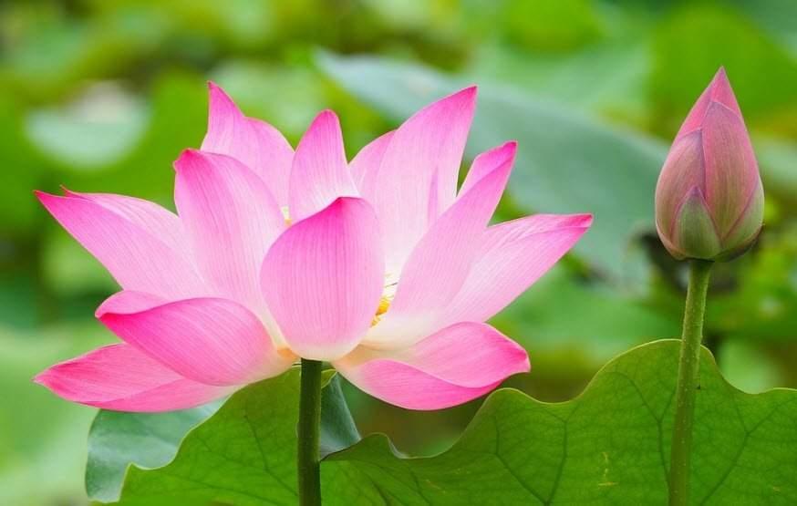 TIẾNG TRUNG: Danh ngôn tình yêu tiếng Trung Quốc hay