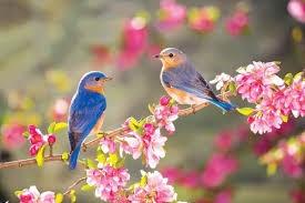 Phân tích hai khổ thơ đầu bài thơ Mùa xuân nho nhỏ