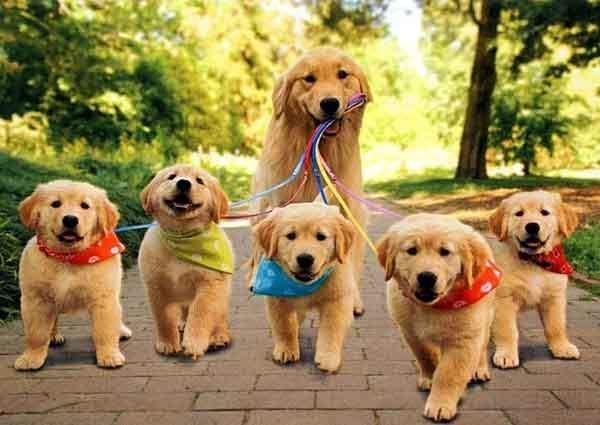 8 điều bạn có thể làm để bảo vệ cún yêu trong mùa hè