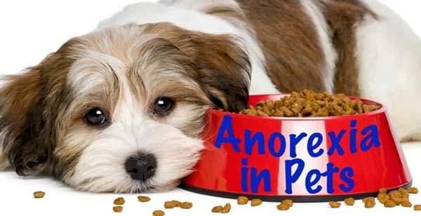 Tại sao cún nhà bạn bỏ ăn?