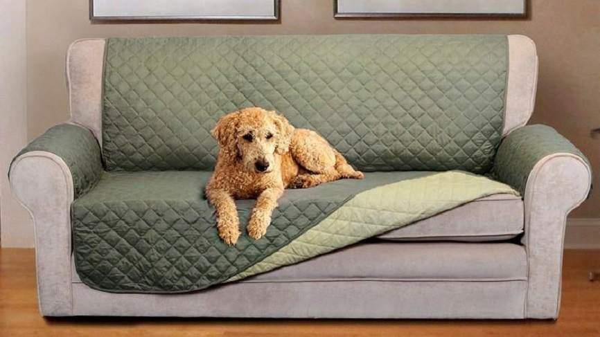 """Nhà nuôi chó mèo thì nên chọn ghế sofa thế nào cho """"an toàn""""?"""