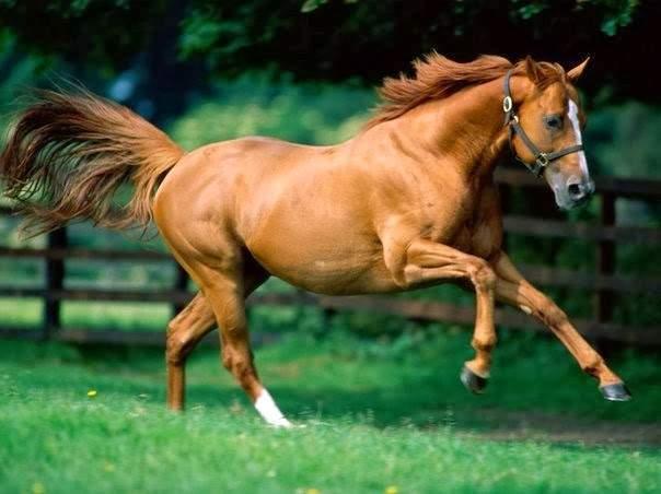 Tả con ngựa mà em có dịp nhìn thấy mẫu 1