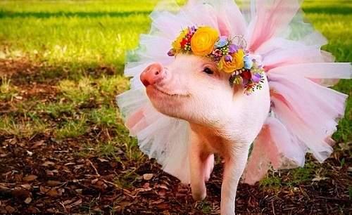 """Cảm nghĩ về truyện cười """"Lợn cưới áo mới"""""""