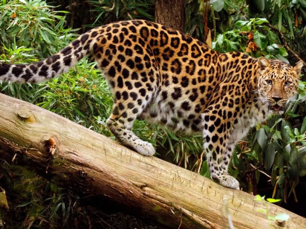 7 loài vật quý hiếm sắp vĩnh viễn biến mất khỏi hành tinh này