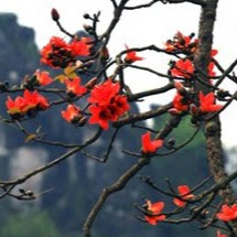 Nguyễn Vân Anh
